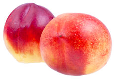 Two fresh Nectarines close up Stock Photos