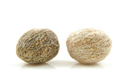 Two fresh nutmeg Royalty Free Stock Images