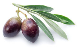 Two fresh olives with leaves. royalty free stock images