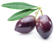 Two fresh olives with leaves. Royalty Free Stock Photo