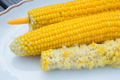 Two fresh and one eaten corncobs Stock Images