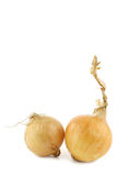 Two fresh onions Stock Photo