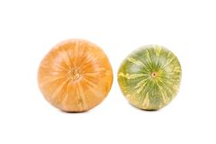 Two fresh orange and green pumpkins Royalty Free Stock Photo
