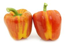 Two fresh orange and yellow `enjoya` bell peppers capsicum. On a white background stock photography