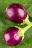 Two Fresh organic brinjals. Royalty Free Stock Photos