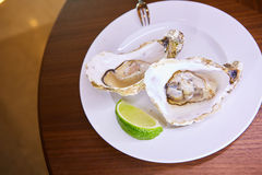 Two fresh oysters platter Royalty Free Stock Photos