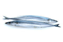 Two fresh pacific saury fishes Stock Photos