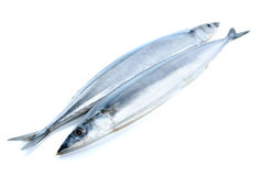 Two fresh pacific saury fishes Royalty Free Stock Images