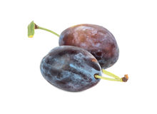 Two fresh plums Stock Image