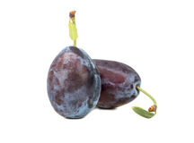 Two fresh plums Royalty Free Stock Photos