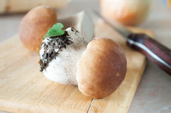 Two of fresh porcini mushrooms Royalty Free Stock Images