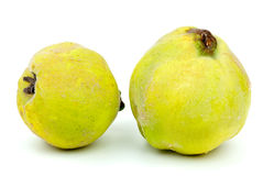 Two fresh quince fruits Stock Image