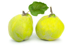 Two fresh quince fruits Royalty Free Stock Photography
