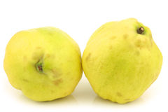 Two fresh quince fruits  Cydonia oblonga. On a white background Royalty Free Stock Photos