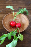 Two fresh radishes in a bowl Stock Images