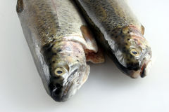 Two Fresh Rainbow trout. Two Fresh Rainbow filleted trout Stock Images