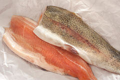 Two fresh rainbow trout fillets. One flesh side up and one skin side up, on greaseproof paper ready to be cooked for a healthy seafood dinner Royalty Free Stock Image