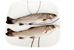 Two Fresh rainbow trout fishes. On the plate isolated on the  white background Royalty Free Stock Photography