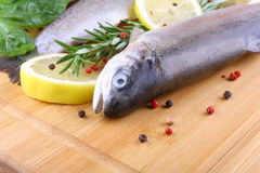 Two fresh rainbow trout with spices on bamboo. Close up Stock Images
