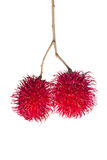 Two fresh rambutans isolated on white. Two fresh rambutans fruit isolated on white background Royalty Free Stock Image