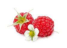 Two fresh raspberries flower. Royalty Free Stock Images