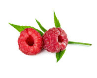 Two fresh raspberries. On leaves isolated on white background Royalty Free Stock Photos