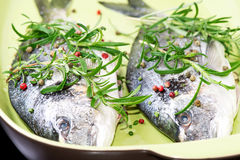 Two fresh raw fishes in plate. Two fresh raw Dorada fish with fresh rosemary herb and peppers on ceramic plate ready to start cooking Stock Photo