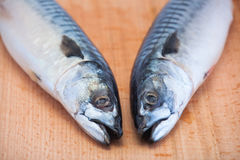 Two fresh, raw mackerel lie on a wooden, cutting board heads tog. Ether Royalty Free Stock Photo