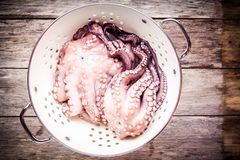 Two fresh raw octopus in white colander. On rustic wooden table Stock Images
