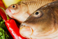 Two fresh raw river fishes, carp and crucian royalty free stock image
