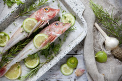 Two fresh raw whole pink fishes on casserole with parsley, rosemary, lemon lime slices and garlic rustic wooden background Stock Photos