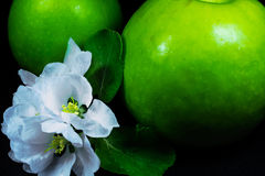 Two fresh ripe green apples with flowers close up on black reflective background Royalty Free Stock Image