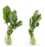 Two fresh ripe organic kohlrabi vegetable on white. Background also scientifically known as Brassica oleracea of gongylodes group Royalty Free Stock Photo