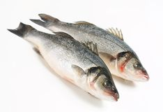 Two fresh sea bass fish Royalty Free Stock Photo
