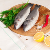 Two fresh sea bass on a white background. Royalty Free Stock Photo