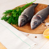 Two fresh sea bass on a white background. Stock Image