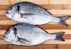 Two fresh sea bream Royalty Free Stock Images