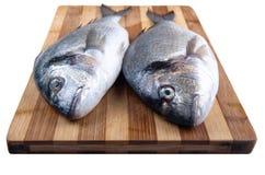 Two fresh sea bream Stock Image