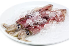 Two fresh squid Stock Photography