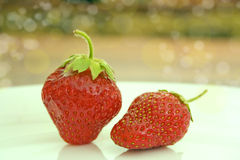 Two fresh strawberries Stock Images