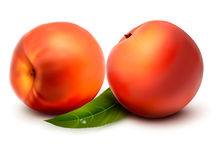 Two fresh sweet peach Royalty Free Stock Photo