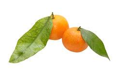 Two fresh tangerine with green leafes.Isolated. Stock Images