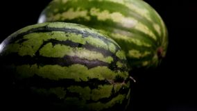 Two fresh tasty watermelons. Slow motion: two fresh striped green huge big tasty watermelons at black surface and bg. First slowly rolls by the floor. Middle stock footage