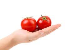 Two fresh tomato on hand. Royalty Free Stock Photo