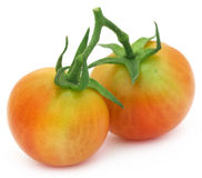 Two fresh tomatoes Royalty Free Stock Image