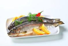 Two fresh trout. Studio shot of two fresh trout Royalty Free Stock Images