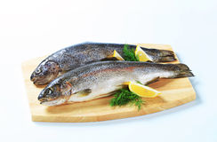 Two fresh trout Stock Photography