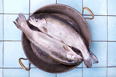 Two fresh trout fish in an old pan Stock Photos