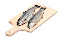 Two fresh trout fishes. Fresh fishes on cutting board isolated with clipping path Stock Photos