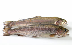 Two fresh trout. Studio shot of two fresh trout stock photography